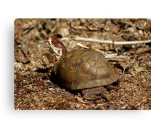 Trail Turtle Canvas Print
