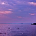 ducks on lake garda by xxnatbxx