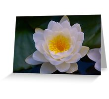 Water Lily Blossom Greeting Card