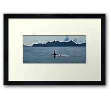 Sea Wolf and Pup Framed Print