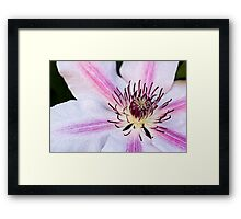 Nelly Moser Framed Print