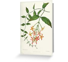 Familiar Flowers of India With Colored Plates, Lena Lowis 0069 QuisQualis Indica Greeting Card