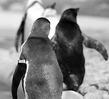 Penguin Walk by Evette Lisle