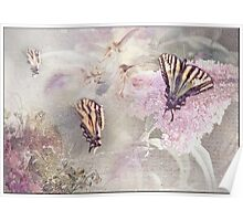 Butterfly Fairies Poster