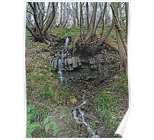 Cascade in Lindley Wood Poster