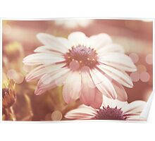 Dreamy Summer Daisies Poster