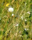 Wind Through the Meadow by RC deWinter