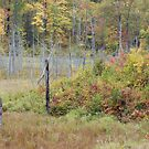 Wetland Fall Colors by April Koehler