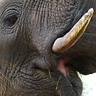 Up close & personal by Explorations Africa Dan MacKenzie