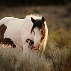GLOWING IN THE FIELD by Kathy Cline