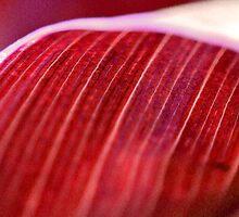 Red Wave by Susan Brown