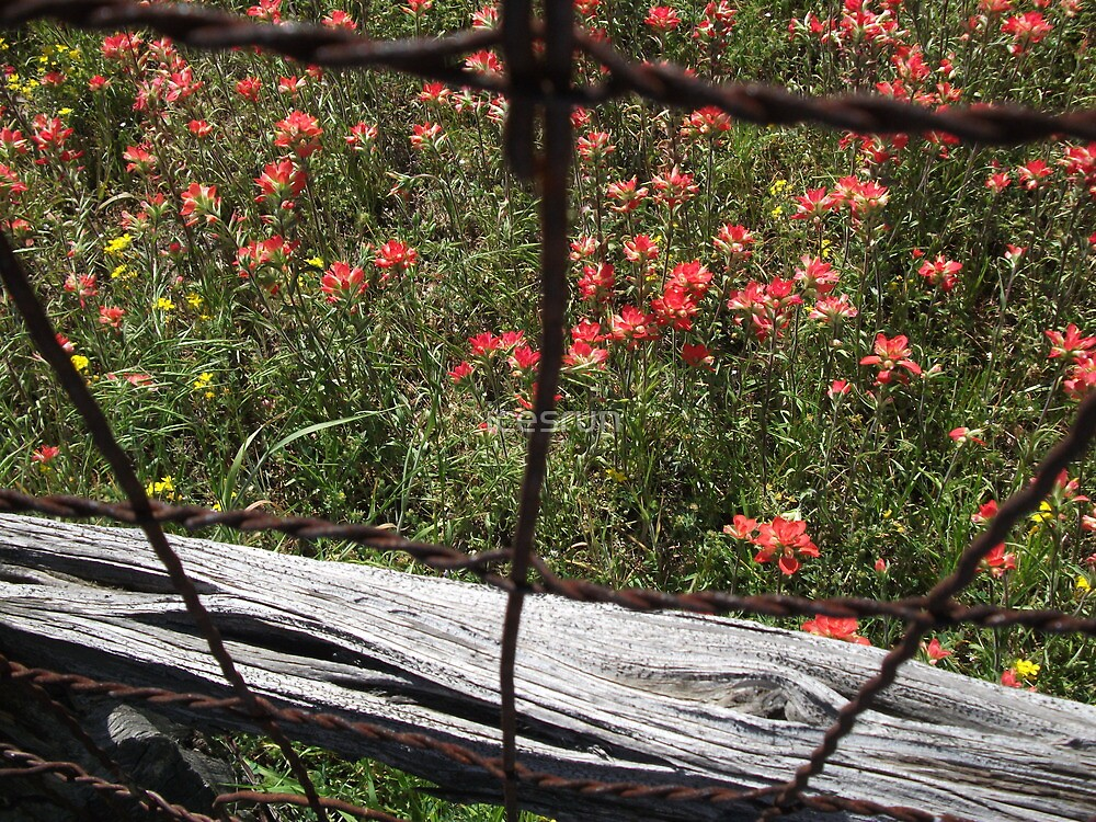 Looking thru the Barbed Wire by icesrun