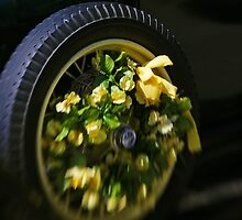 Daffodil Tire by mlentz