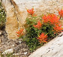 Paintbrush on Cliff by Kim Barton