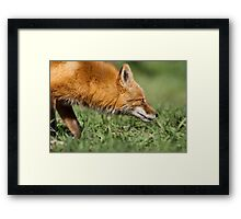 Follow Your Nose Framed Print