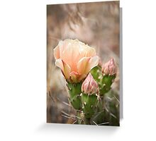 Peachy Cactus Flower Greeting Card