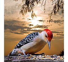 Under the Sunset Photographic Print