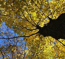 Autumn Leave - Houston Woods Ohio by virtualdiablo