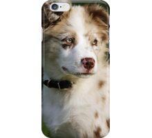 Koda iPhone Case/Skin
