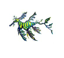 Leafy Seadragon by Linda Callaghan