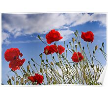 Poppy Field, Lincolnshire Poster