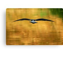Full Flight Canvas Print