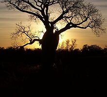 Boab Sunrise by KathPatt