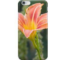Hemerocallis lilioasphodelus iPhone Case/Skin
