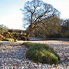 The Strid river Yorkshire by patjila