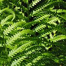 I am green by jammingene