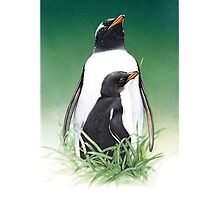 Gentoo penguin with chick, Macquarie Island Photographic Print