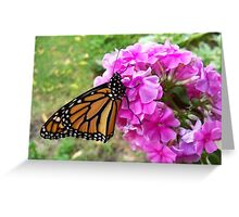 Monarch on Phlox Greeting Card