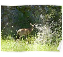 Pretty doe in the grass Poster