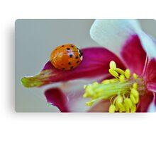 Ladybug. Canvas Print