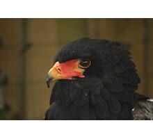 large Bird of Prey Photographic Print