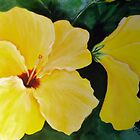 Yellow Hibiscus by Cathy Gilday