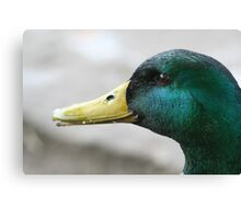 What's Up Duck? Canvas Print