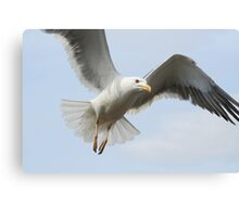 Coming In To Land Canvas Print