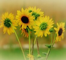 Summer Yellow.. Black Faces by trueblvr