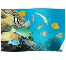 Tropical fish school in a coral reef Poster