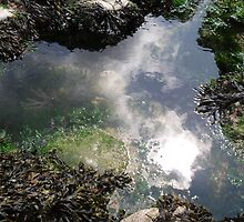 The sun hides in the rockpool by rachel  blake