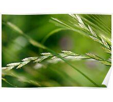 green... i mean, grain. Poster