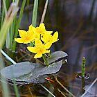 Marsh Marigolds by Teresa Zieba