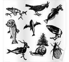 Animal patterns Poster