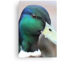 Smiling Duck Canvas Print