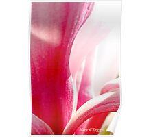 Pink magnolia bloom Poster