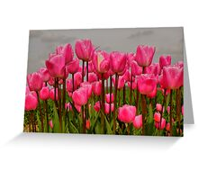 Lovely Pink Tulips on a Grey Day Greeting Card