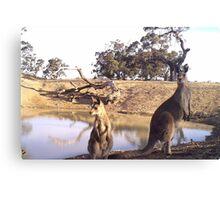 Standing Kangaroos Canvas Print