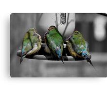 Three Birds in a Row.  Canvas Print