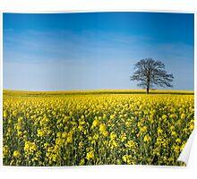 Spring Fields Poster